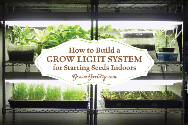 how to grow seeds indoors with lights