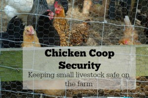 Chicken coop security barriers homestead bloggers network for Can ducks and chickens share a coop