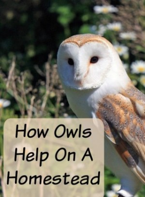 how to get rid of owls around your house