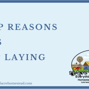 3 Top Reasons Hens Stop Laying